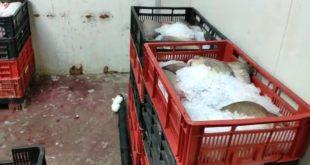 Transport de pește fără documente