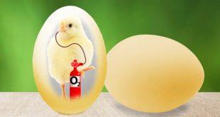Cum respiră puii de păsări în interiorul ouălor?